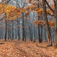 лес :: Михаил Корнилов