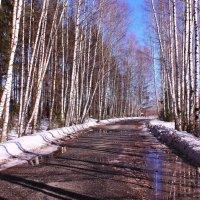По весенней дороге с солнцем и радостью :: Татьяна Ломтева