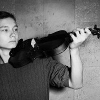 Скрипка :: Светлана Попкова