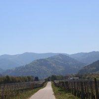 Дорога вдоль виноградников :: Mariya laimite