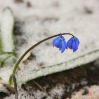 борьба весны и зимы :: Татьяна_Ш