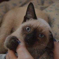 Die Katze :: Юлия Красноперова