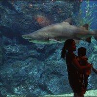 На фоне акулы :: Наталия Григорьева
