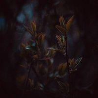 Весна :: Алиса Лыжко