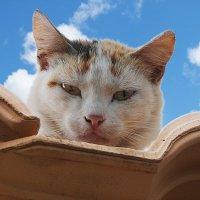 Небесный кот. :: Елена Тумель