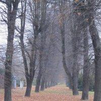 Калининград :: Валентина Дмитровская