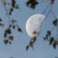 Половинка Луны :: genar-58 '
