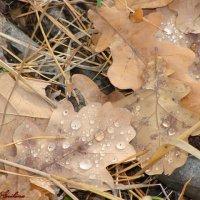 Осенняя роса,как слёзы... :: °•●Елена●•° ♀