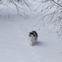 Охота :: Ирина Рябкова