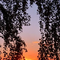 Повисло солнце на ветвях... :: Наталья Юрова