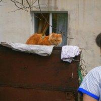 Встреча в Советске...городок в Тульской области....Жила бабушка ..и была у нее кошка Василиса... :: Людмила Богданова (Скачко)