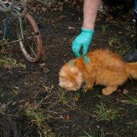 Баушкина кошка...Василиска...(к моему стыду ..имя кошки помню)) :: Людмила Богданова (Скачко)