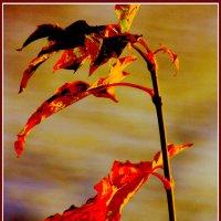 огненная симфония :: Alexander Andronik