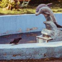 Он тоже хочет стать дельфином :: Алиса Лыжко