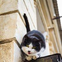 САмый ласковый кот на свете. :: Ардалион Иволгин