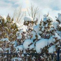 Вот такая пихтово-кованная ограда :: Вадим Куликов