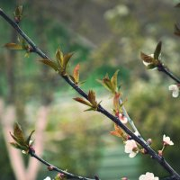 Весна :: Ольга Могдалёва
