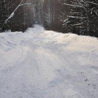 "снег ""выключили"") :: Наталья Сорокина"