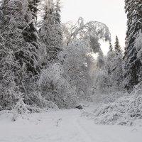 Зимние картинки :: Сергей Сёмин