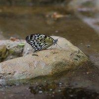 Бабочка :: Денис Финягин