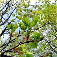 Весеннее цветение :: Liliya Kharlamova