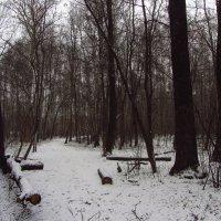 В Москве - окончательно Зима! Img_3982 :: Андрей Лукьянов
