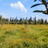 Весна в разгаре :: Yana Fizazi