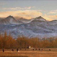 Суровый закат в предгорье Тянь-Шаня :: KateRina ***