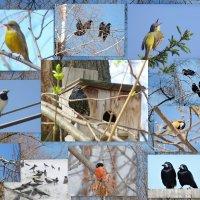 Поздравляю любителей птиц с Днем Птиц! :: Ната Волга