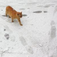 Кот тоже не верит, что Воронеж завалило снегом :: Татьяна_Ш