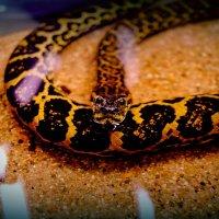 Прекрасна,но опасна :) :: Anastezia Charkina