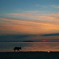 Утро Одинокого Волка :: Александр Бойко