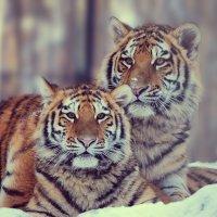 Двое из ларца одинаковы с лица :: Татьяна Степанова