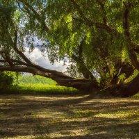 Под тенью старого дерева. :: Kassen Kussulbaev