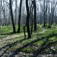 Новомосковский лес :: Владислав Довгопол