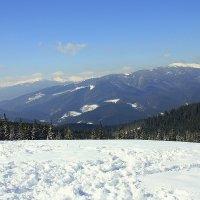 Снежные просторы :: Ирина Подольская