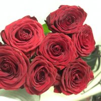 розы :: Ольга