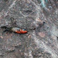 Чудо-юдо рыба к... :: Михаил Лобов (drakonmick)
