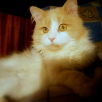 Есть где-то Кошачья Планета. Там кошки, как люди.... :: Людмила Богданова (Скачко)