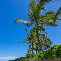 Honolulu lanikai beach :: Vita Farrar