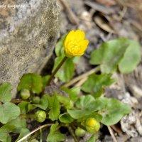 Цветок у камня :: Наталья (ShadeNataly) Мельник
