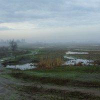 Дорога в туманную даль... :: Ксения Довгопол