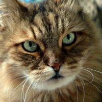 My pretty cat :: Марина Морей