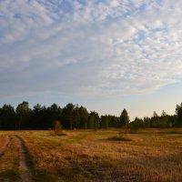 в поле :: Сергей Симановский