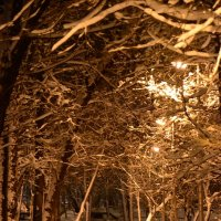 зимний парк :: Сергей Симановский