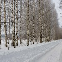 Зимняя дорога :: Валентин Котляров