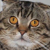 наш любимый кот :: Андрей Ларин