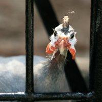 сижу за решеткой в темнице сыр-ой :: Олег Лукьянов