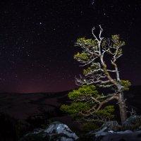 Зимняя ночь :: Александр Хорошилов