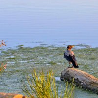 ворона, смотрящая на закат :: Galina